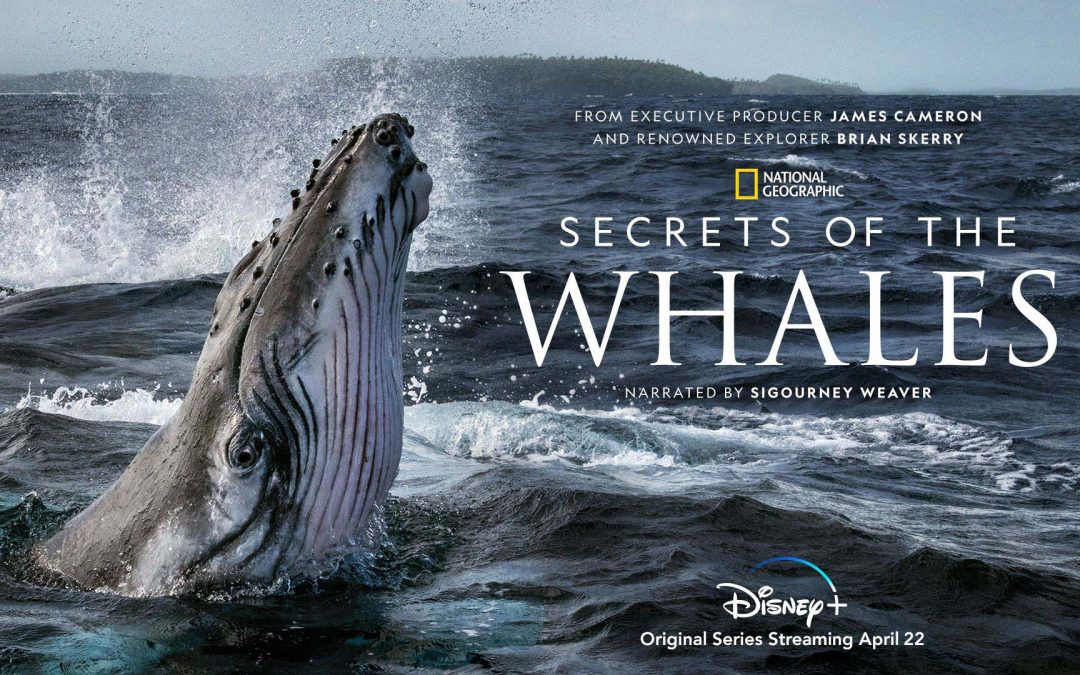 IMG Artists is proud to announce a new National Geographic Film Concert: Secrets of the Whales